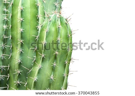 Close up cactus isolated on white background - stock photo
