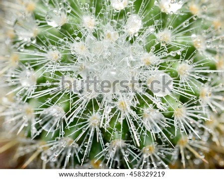 close up cactus texture with water drop