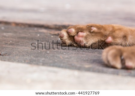 Close up cat feet on the wooden floor. - stock photo