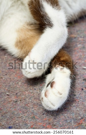 Close up cat paw - stock photo