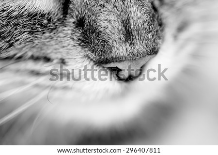 close up cat's nose. black and white picture