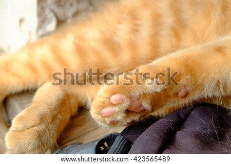 close-up cat's paws, cat feet on Wooden floor. - stock photo