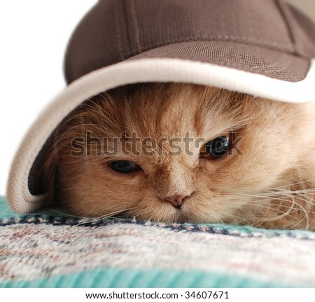 Close-up cat wears a hat - stock photo