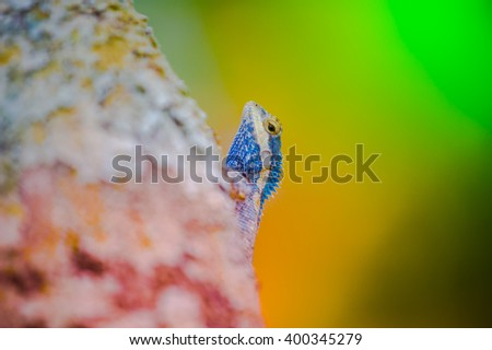 Close up Chameleon on the tree - stock photo