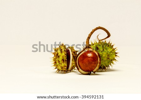 Close Up Chestnuts in nutshell isolated on white background - stock photo