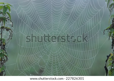 close-up cobweb on the dry grass misty autumn morning - stock photo