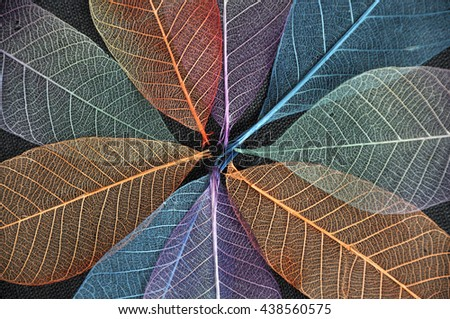 Close up colorful dried leaves background in blooming flower shape - stock photo