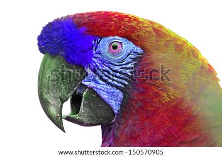 Close-up Colorful Macaw Ara ararauna head - stock photo
