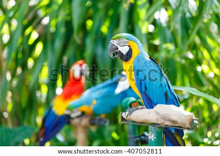 Close up colorful parrot in flower garden - stock photo