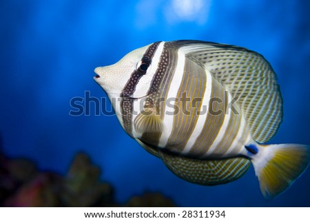 Close up colorful sea fish in a aquarium