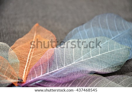 Close up colorful skeleton leaves on background - stock photo