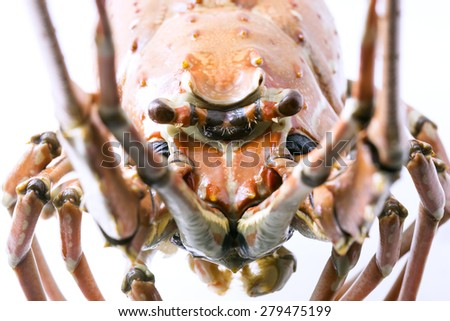 Close up cooked Lobster head - stock photo