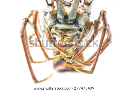 Close up cooked Lobster mount and legs - stock photo