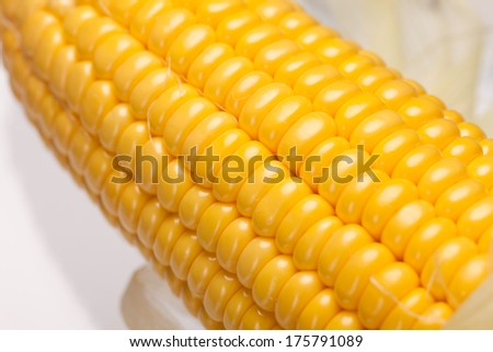 close up corn on white background