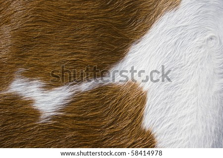 close up cow hide as background - stock photo