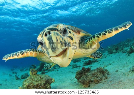 Close up crop of Hawksbill Sea Turtle's face smiling for camera - stock photo