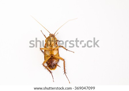 Close up dead Cockroach isolated background.  ( Cockroaches as carriers of disease ) - stock photo