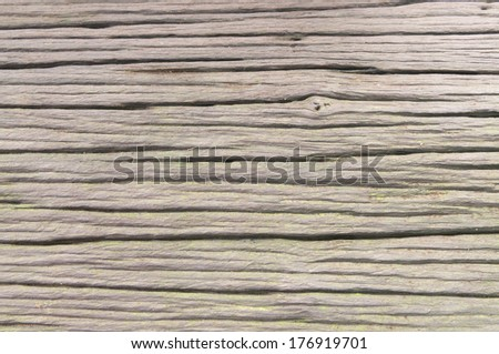 Close up Dead wood, Thailand - stock photo