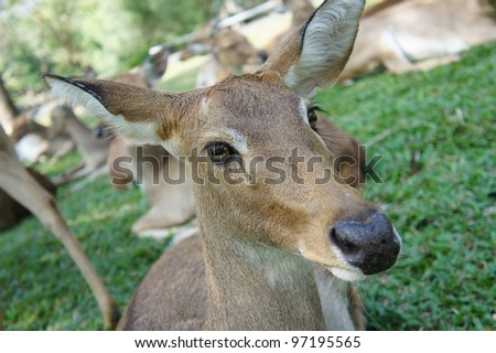 Close up Deer