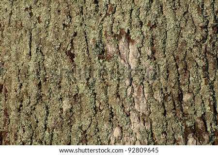 close up detail of oak bark