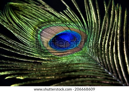 close up detail of peacock feather - stock photo