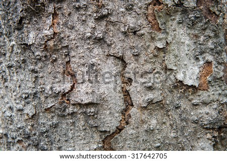 close up detailed tree bark texture - stock photo
