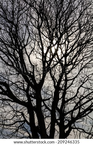 Close-up details of a dead tree Silhouette with solar sky. - stock photo