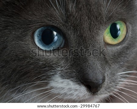 Close-up  different eyes cat to the topic of contact lenses or eye care