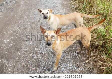 Close up dirty stray dogs standing on bumpy road and looking up to camera - stock photo