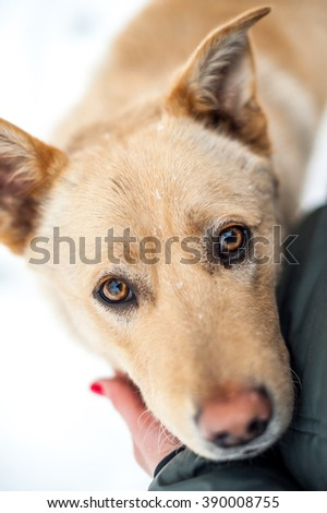 Close-up dog portrait looking in eyes - stock photo
