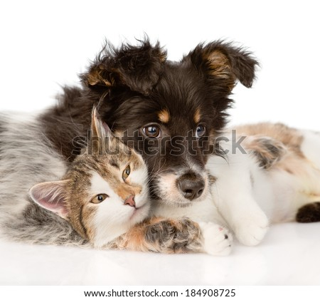 close-up dog with cat together. isolated on white background - stock photo