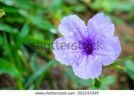 close up drop on purple flower - stock photo