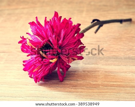 Close up dry flower on wooden background - stock photo