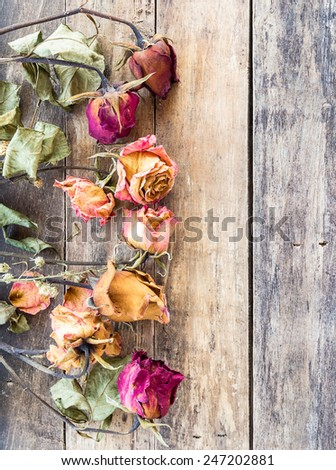 Close up dry rose on wooden background