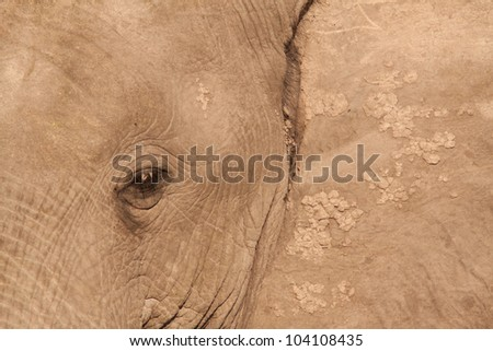 close up elephant - stock photo