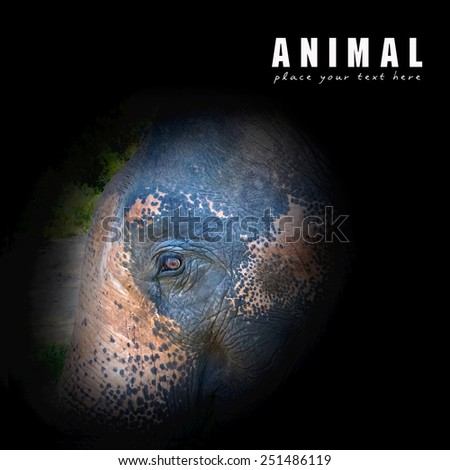 Close-up elephant eye in thailand - stock photo