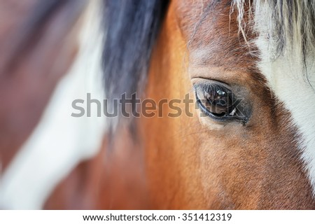 Close up eye of the big brown horse - stock photo