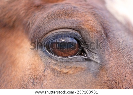 Close up eye of the horse - stock photo