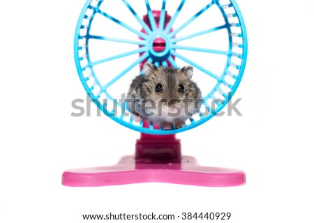 Close-up face Djungarian hamster on white background - stock photo