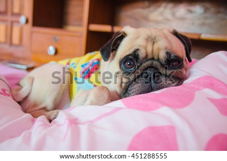 Close up face of Cute pug puppy dog sleeping rest on the bed and looking to camera for wonder somethings - stock photo