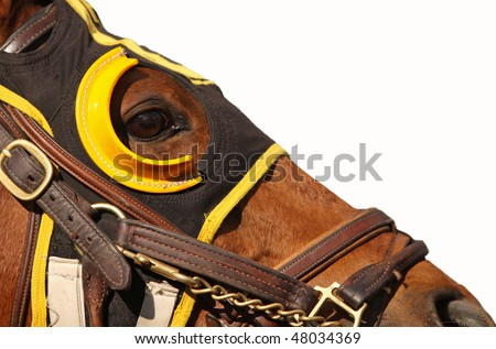 Close up face of race horse with bridle and hood on white background with copy space - stock photo
