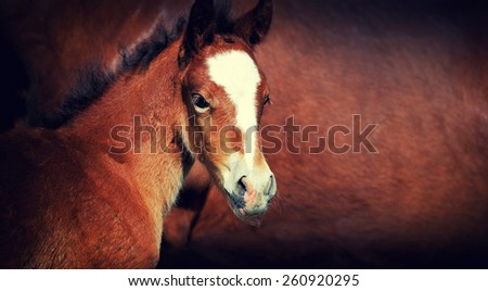 Close-up foal on a background of brown leather horse - stock photo