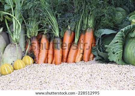 Close up fresh organic carrots with other vegetables - stock photo