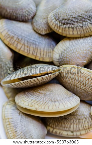 close up fresh raw Surf clam
