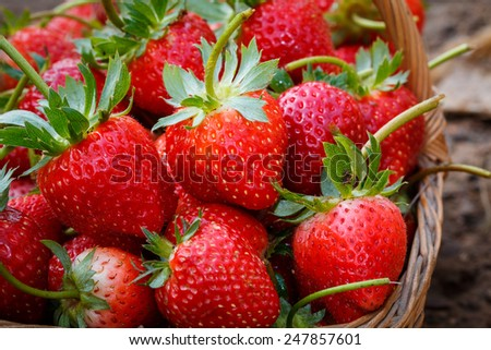 close up fresh strawberry on basket - stock photo