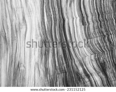 Close up fresh wood section - stock photo