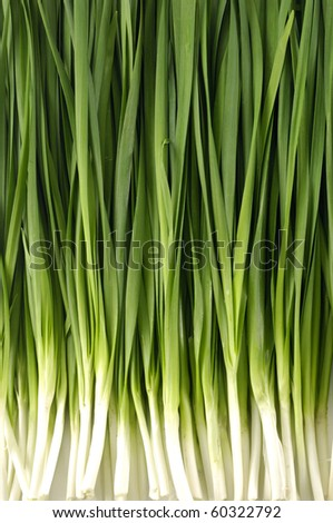Close up fresh young onion - stock photo