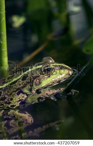 Close up frog - stock photo