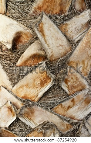 Close up from a palm tree trunk. - stock photo