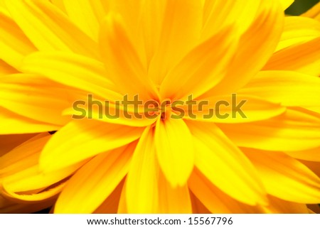 Close up from top of a yellow flower.